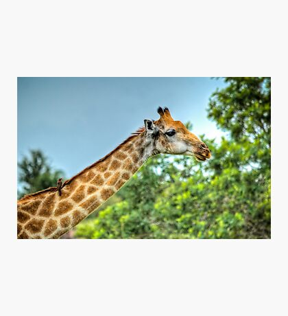 Travelling Companion Photographic Print