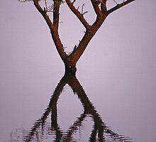 Sunset reflection by Prasad