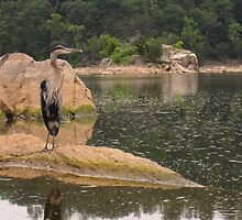 Heron and Turtle by cameraperson