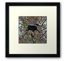 Birds of Prey Framed Print