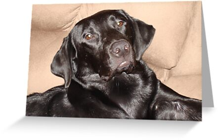 Brady the Black Labrador by tawaslake