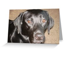 Black Lab Facial Shot, Brady Greeting Card