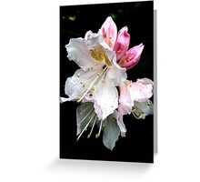 Fabulous Flowers Greeting Card