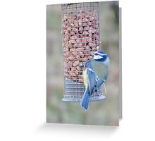 Feeding time for Blue Tit............ Greeting Card