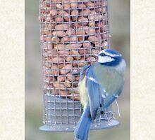 Feeding time for Blue Tit............ Hoodie