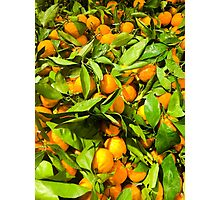 pile of satsumas Photographic Print