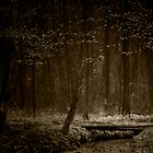 afraid of the light I by andreasphoto