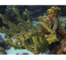 Soft corals Photographic Print