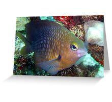 Princess damsel fish Greeting Card