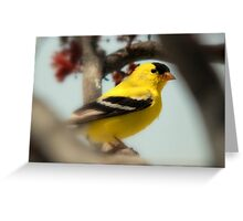 American Goldfinch Male Greeting Card