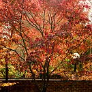 The Beauty of Fall by ctheworld