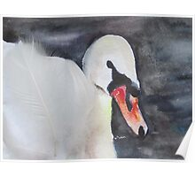 Royal Swan 1 Poster