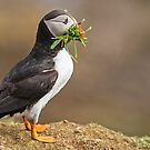 Vegetarian Puffin by Alan Forder