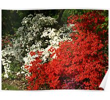 Azalea Garden Poster