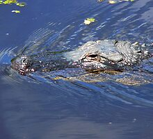 Alligator in the Wild by Rosalie Scanlon