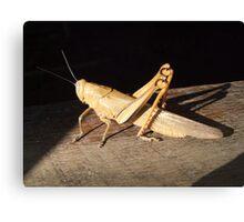 *bows* Grasshopper Canvas Print