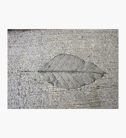 Sidewalk Art by Leaf Photographic Print
