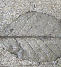 Sidewalk Art by Leaf Sticker