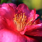 flower by dydydada