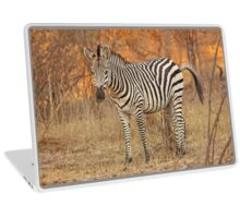 Zebra  Laptop Skin