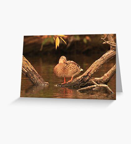 Lake Okauchee Mallard Greeting Card