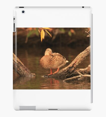 Lake Okauchee Mallard iPad Case/Skin