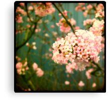 pink viewfinder Canvas Print