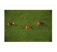 Deer in Bean Field Art Print