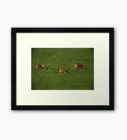 Deer in Bean Field Framed Print