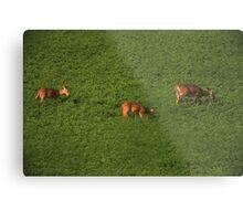 Deer in Bean Field Metal Print