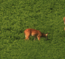 Deer in Bean Field Sticker