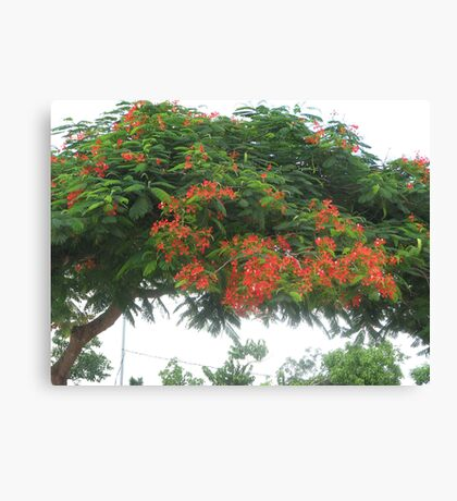 Favorite Tree Canvas Print