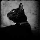 The Cat... by Louise LeGresley