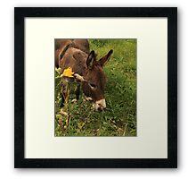 Hot Wheezing Donkey Framed Print