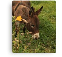 Hot Wheezing Donkey Canvas Print