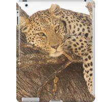 Cat Bird Seat iPad Case/Skin