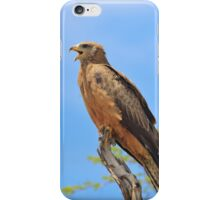 Yellow-billed Kite - African Raptors of Power iPhone Case/Skin