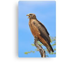 Yellow-billed Kite - African Raptors of Power Canvas Print