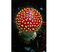 Redcap Dome Photographic Print