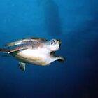 Tenerife Turtle by Colin Brittain
