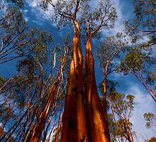 Reaching Reds by Peter Hodgson