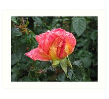 Wet and Wild Rose Art Print