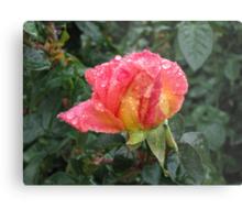 Wet and Wild Rose Metal Print