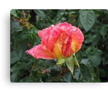 Wet and Wild Rose Canvas Print