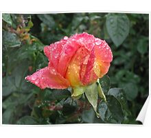 Wet and Wild Rose Poster