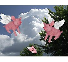 FLYING PIGS .. PIGGLETS DROP AND PLAY.. PICTURE AND OR CARD Photographic Print