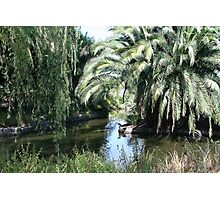 Paradise for water birds Photographic Print