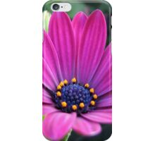 Pink and Purple - Cape Daisy and Petunias iPhone Case/Skin