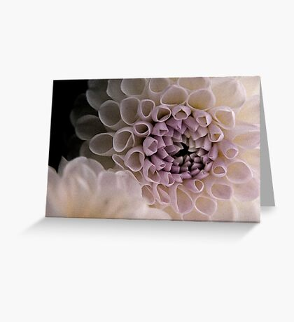 Dahlia in pink Greeting Card
