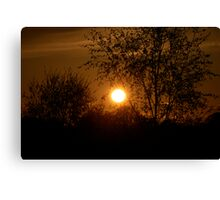Sunset through a tree Canvas Print